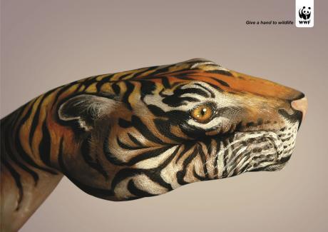 guido_daniele__tiger